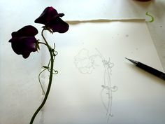 how to draw a sweet pea flower step by step