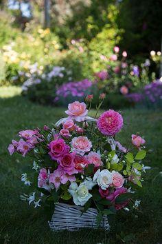 from the blog: Rose Notes:  arrangement:  Poulsens Pearl, Christopher Marlowe, White Masterpiece, Snowbird, Pink Gruss an Achen, Bellls Story.