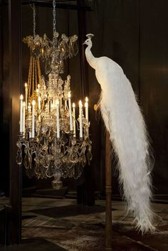 I appreciate the subtlety of combining taxidermy and large chandeliers....