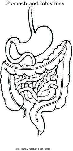 Digestive system- use in Why People Eat, create a belly map of what we ate and drank in a day Science Activities For Kids, Science Classroom, Teaching Science, Science Projects, Intestines Anatomy, Body Preschool, Teaching Portfolio, Human Body Unit, Body Systems