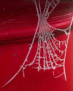 Red web