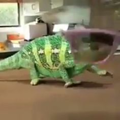 MasyaAllah Watch this Chameleon and marvel at Allah's (swt) creation.