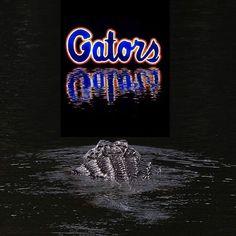 Gators Fla Gators, Florida Gators Baby, Florida Gators Football, Sec Football, Florida Girl, College Football, Florida Gators Wallpaper, Spirit Shirts, Female Gymnast