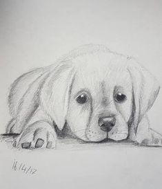 Art Discover --- Animal Sketches Easy Easy Animal Drawings Pencil Drawings Of Animals Drawings Of Dogs Puppy Drawings Easy Pencil Drawings Cool Art Drawings Charcoal Drawings Girl Drawing Sketches Animal Sketches Easy, Easy Animal Drawings, Pencil Drawings Of Animals, Realistic Drawings Of Animals, Girl Drawing Sketches, Art Drawings Sketches Simple, Cute Drawings, Drawing Ideas, Puppy Drawings