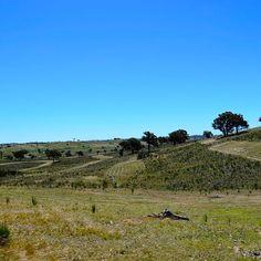 #contour #tree #planting #preparation #greeningaustralia