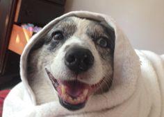 Tia my wonder dog after her bath!
