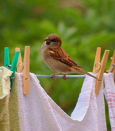 rather than bird on laundry line, bird(s) on bunting/streamers