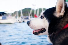 Taking your pooch cruising or having a temporary canine guest on board your sailboat? Read these 5 tips to be fully prepared for sailing with a dog