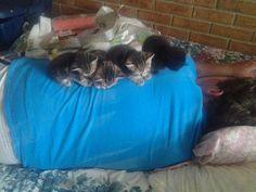 「猫がいて幸せを感じるのは…こんな時!」と言い切れる写真21枚:らばQ