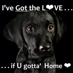 I've got the L<3VE #adoption #dog