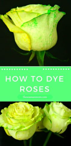 HOW TO DYE ROSES - Roses make a beautiful gift and are a great addition to any home decor. Make them even prettier with this easy tutorial on how to dye roses.