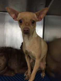 35668628 located in El Paso, TX, to be destroyed 7/16/17