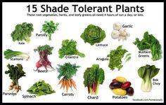 15 shade tolerant plants
