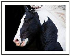 Black & White Horse Wall Art