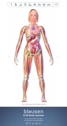 Teaching Resources: Interactive Body System Teaching Resources: Our inte Human Body Organs, Human Body Systems, Human Body Anatomy, Muscle Anatomy, Muscular System Anatomy, Basic Anatomy And Physiology, Medicine Student, Medical Anatomy, Emergency Medicine