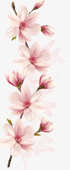 Vector a pink magnolia flowers, Magnolia, Pink, One PNG and Vector - Body Art - Orchideen Flor Magnolia, Magnolia Flower, Magnolia Branch, Flower Phone Wallpaper, Iphone Wallpaper, Illustration Rose, Blossom Tattoo, Vector Flowers, Pink Design