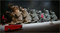 the circus was so fun