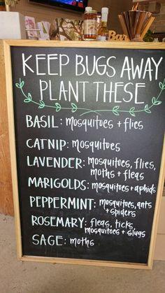 Plants that keep bugs away. Ideas from a plant store. Plants that keep bugs away. Ideas from a plant Garden Yard Ideas, Lawn And Garden, Garden Projects, Garden Bugs, Container Gardening, Gardening Tips, Plants That Repel Bugs, Potager Bio, Dream Garden
