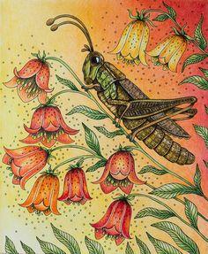 Hotovo :-) #sommarnatt #hannakarlzon #coloring #coloringbook #adultcoloringbook…