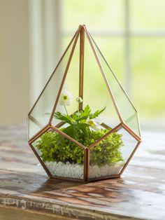 Glass Terrarium - Teardrop Tabletop Terrarium - Small Terrarium...order succulents from succulent oasis on Etsy