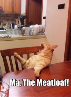 Cat Wants Food
