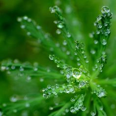 Green plant in morning dew