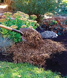 easy way to make new flower beds, lay newspaper down in the shape you want your bed, hose down, cover with blood meal or composted manure 4cm deep, then cover with 5-7cm of mulch. Ready to plant in 60 days