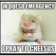 In queso emergency