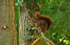 Gibt`s noch Nüsse ?  ....  fragte das Eichhörnchen im Garten. Na klar. Und Äpfel und Sonnenblumenkerne.