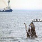 Whale says Ohai boat!