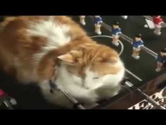 Funny Sleeping style Cats and Dogs 2015