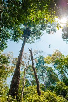 Kikkerperspectief in de jungle van Thailand
