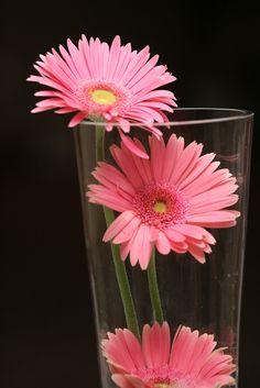 pink gerber daisy centerpiece