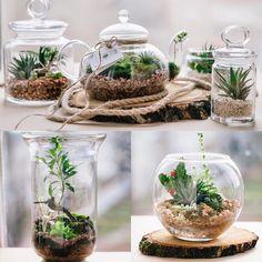Наши друзья дизайнеры #zelenakolba создают восхитительные флорариумы #декор #экодизайн #эко #floral