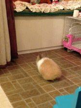逃げろ!!ここはかわいい動物GIFスレだぎゃああああああ!!!!:ハムスター速報