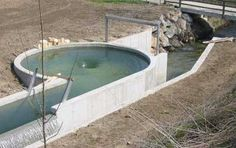Gravitational Vortex Power Plant is Safe for Fish