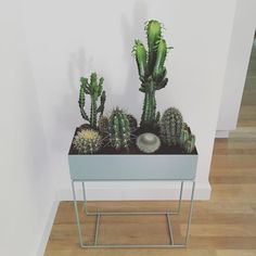 Beautiful Indoor Plants As Your Homes Decor Ideas Ornamental plants in the house is a dried plant used for ornamental plants that are often placed in the room. Like mini cactus plants that are generally mini-sized commonly planted on pot media. Indoor Cactus Plants, Hanging Plants, Cacti, Home Decoracion, Plant Box, House Plants Decor, Style Deco, Ornamental Plants, Landscaping