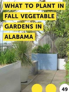 What to Plant in Fall Vegetable Gardens in Alabama. Fall gardens are a great cha...#alabama #cha #fall #gardens #great #plant #vegetable When To Plant Vegetables, Fall Vegetables, Growing Vegetables, Growing Plants, Small Shrubs, Vascular Plant, Square Foot Gardening, Hydroponic Gardening, Vegetable Gardening