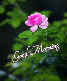 Good Morning Images For Whatsapp Good Morning Friends Images, Good Morning Roses, Good Morning Beautiful Images, Good Morning Images Download, Good Morning Picture, Good Morning Good Night, Morning Pictures, Morning Wish, Happy Morning