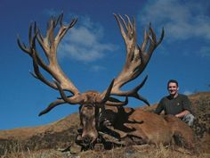 New Zealand Hunting? Yes Please! Trophy red stags with the opportunity to pursue world-class tahr and chamois, this is New Zealand hunting at it's finest. http://gothunts.com/new-zealand-hunting-red-stag-tahr-chamois/
