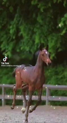Horse Videos, Horses, Animals, Animales, Animaux, Animal, Animais, Horse