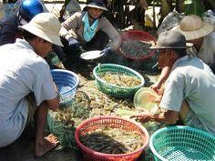 Hot Topics | Vietnam Aquaculture Network - Mạng Thủy sản Việt Nam
