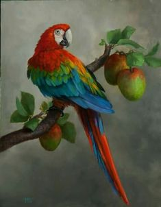 68 Ideas For Colorful Bird Painting Draw Tropical Art, Tropical Birds, Exotic Birds, Colorful Birds, Bird Drawings, Animal Drawings, Pretty Birds, Beautiful Birds, Parrot Painting