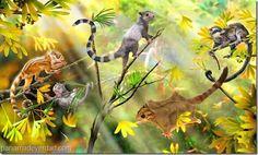 Descubren fósiles de los antepasados de las ardillas - http://panamadeverdad.com/2014/09/13/descubren-fosiles-de-los-antepasados-de-las-ardillas/