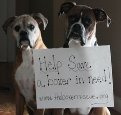 The Boxer Rescue www.theboxerrescue.org