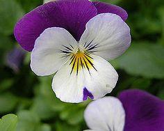Flores de invierno: Elige la tuya - Foto 1