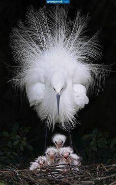 aves más interesantes