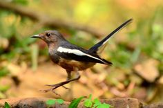 Photo listed in Nature Shot taken with NIKON D7000. 7 Repics and 19 likes. Image taken by sriramshankars.
