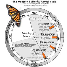The Annual Cycle of Monarch Butterflies from when they Arrive in Spring, to when they Depart for their Amazing Fall Migration.