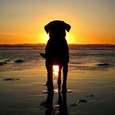 16 People Who Really Know How To Take A Summer Photo – Pets and Supplies Silhouette Photography, Animal Photography, Amazing Photography, Photography Jobs, Photography Backdrops, Photography Lighting, Digital Photography, Wedding Photography, Photography Accessories